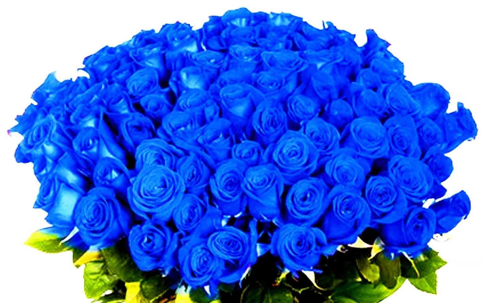 Цветов санкт-петербурге, купить синие розы цветы фото